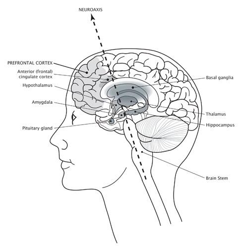 Brain image Buddha's Brain